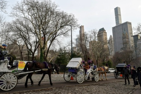Carriage rides everywhere throughout the park