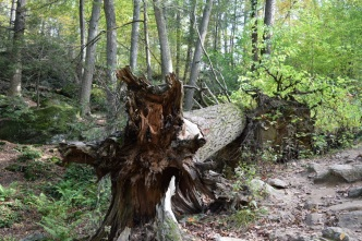 Fallen tree at the park