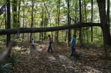 Fallen trees make good balance beams