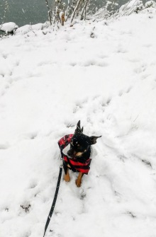 Oliver's not sure about snow