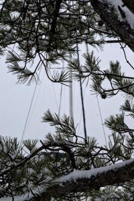 Varekai's mast behind snowy branches