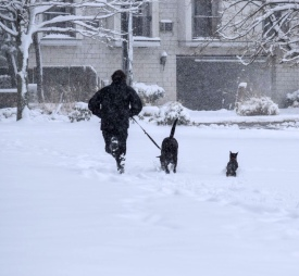 Liam running with both dogs