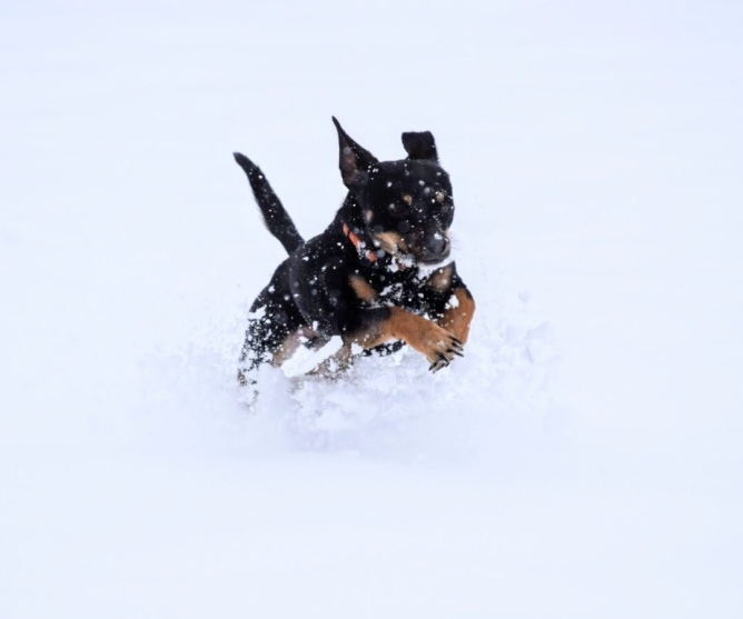 Oliver snow jumping
